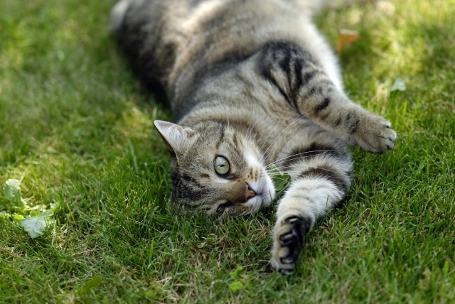 normal cat behavior after surgery